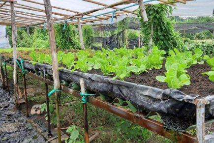 แปลงผัก Bio ท่าม่วง กาญจนบุรี